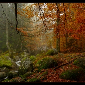 Златна есен на Златните мостове