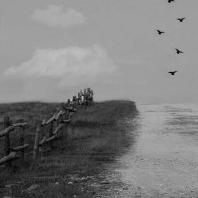 Следвай птиците....