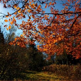 И пак Витошка есен