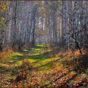 Брезовата гора и есента