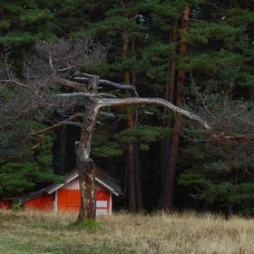 там горе,при старото дърво си живеели...