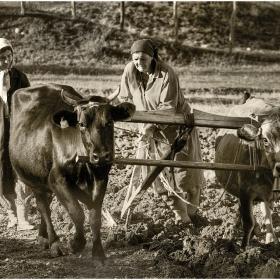 Апотеоз на съвремената аграрна политика в Родопа - 5.11.2010г.