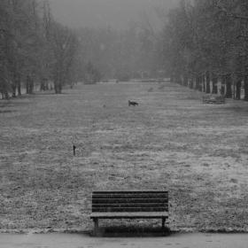 Бяла тишина