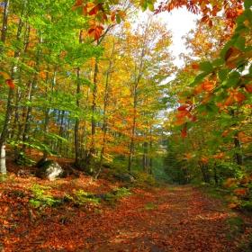 Есенни багри в Странджа планина ....