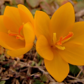 Предпролетно :)