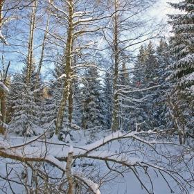 Претрупани със сняг