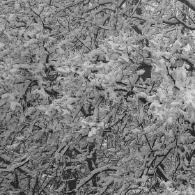 Снежна дантела