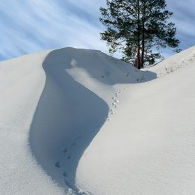 Снежные зарисовки. (1)