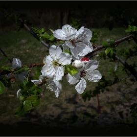 Започва най-хубавата пролет  ...