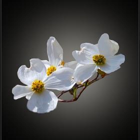 пролет е дошла