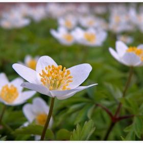 Пролет моя,моя бяла пролет