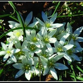 Пролетно очарование 1