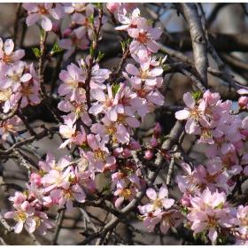 Пролетно очарование 2