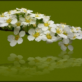 бяло отражение