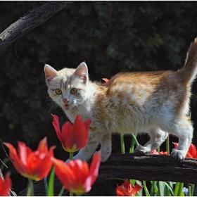 Котешко пролетно настроение 2