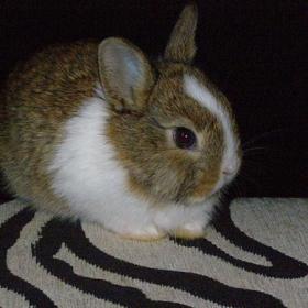 Моето зайче Кики