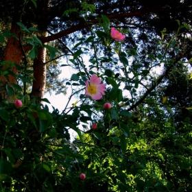 Красив шипков храст срещу язовира