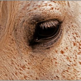 Макро-конъ...3