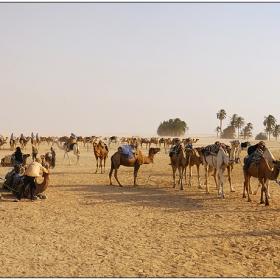 Направо - камили, наляво - камили, надясно... пак камили