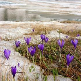 Рилска пролет