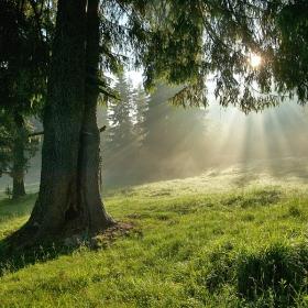 Утро в гората