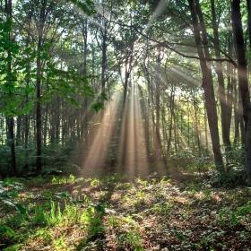 Мистичната гора 3