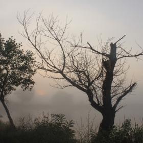 Мъгливо утро-1