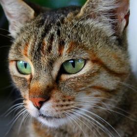 Котки!  Поздрав за dinkoi /понеже е фен на тези домашни любимци