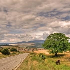 Старецът и полето / Пътя и селото