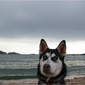 Айра на море