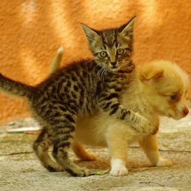 Цял живот ли ще те нося на гърба си...