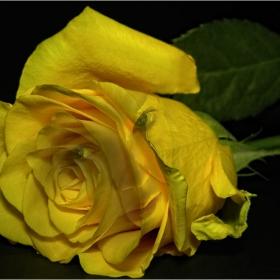 В света на розите  ...