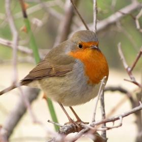 Най-нежното птиче, което съм виждала :)