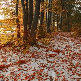 Цветовете на есента....