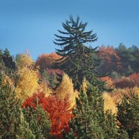 Есен в долината на река Джерман