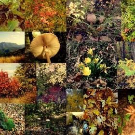 Есен,есен умира сезон .....