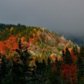 Пожарите на есента 2