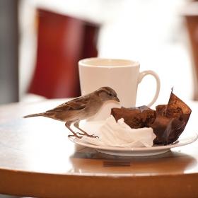 На кафе с ..........