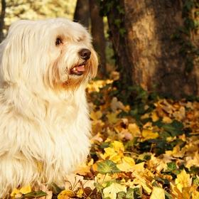 Слънчевото куче Макси
