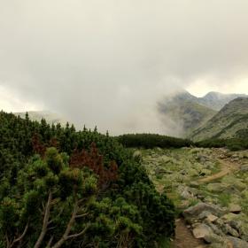 За пътеката,мъглата и лъжата !