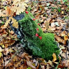 Есен в гората..