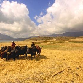 харман (Етиопия, 2011)
