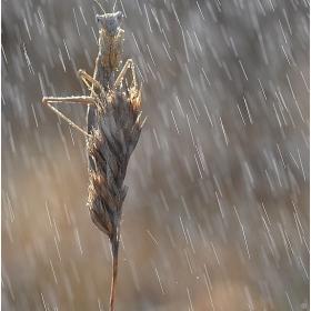 November rain :-)
