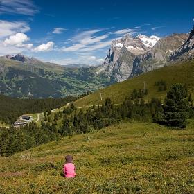 Алпийски боровинки