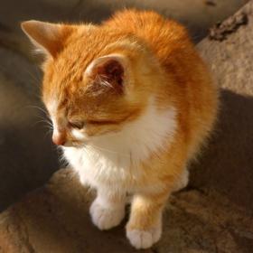 рижото котенце