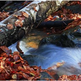 Есенно поточе