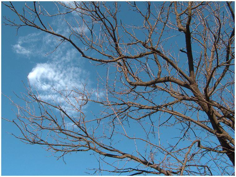 Дървото и облачето...