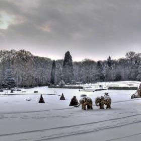 слоновете през зимата