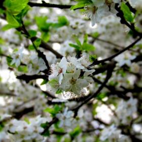 Пролетна импресия 1