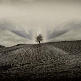 дървото, което мечтаеше....